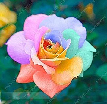 100pcs 20 sortes de graines Rose So Black Rose Charme Bonsai Graines de fleurs vivaces rares fleurs des plantes pour jardin multicolor