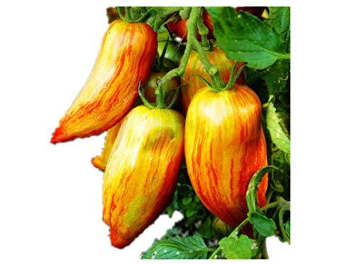 KINGDUO 100Pcs/Pack Pomodoro Giallo Verde Rosso Semi Serra In Vaso Verdura Organica & Frutta Semi-Giallo