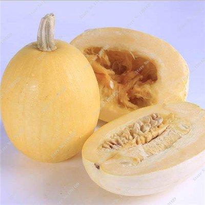 Graines de citrouille rares Cucurbita fil d'or de citrouille non-OGM légumes jardin Bonsai plantes ornementales semences Escalade 10 Pcs / sac 5