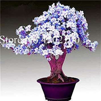 CUSHY 100 Stück exotischen japanischen AZEA Bonsai, Misch Rhododendron AZEA, AZEA Bonsai Samen DIY Seedssseed für Hausgarten: 7