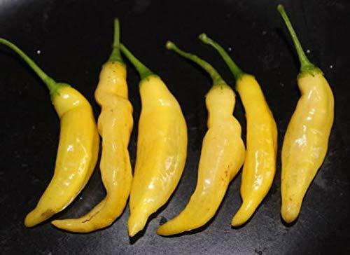 Portal Cool Samen Paket: 25+ Organicy Erbstück Aji Pineapple Hot Pepper Samen Grown - C 038