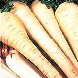Premier Seeds Direct PAR06 2014 Ernte feinste weiße Gem PastinakenSamen (Packung mit 1500)
