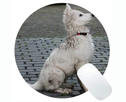 Runde Mauspads, Hündchen-Dirty Swiss White Shepherd Dog Pet Gaming-Mauspad