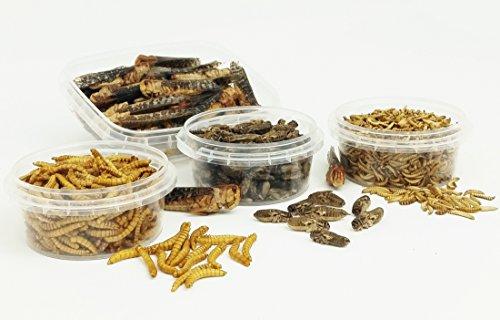 Insekten-Probierpack M - Mehlwürmer, Buffalowürmer, Grillen, Heuschrecken - 43g