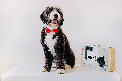 Petcube Bites Wi-Fi Pet Camera With Treat Dispenser: 2-Way Audio, HD 1080p Video And Night Vision, For Monitoring Your… 7