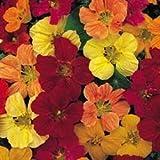 Fiore - Kings Seeds - Confezione Multicolore - Nasturzio - Tom Thumb Mix