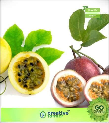 Pinkdose Fruchtsamen Gemischte Maracuja - Exotische Samen schnell Fruchtpflanzensamen Fruchtsamen Samen
