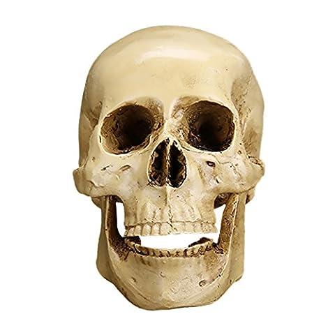 Gazechimp Gothic Schädel Figur Menschlichen Kopf Modell Ornament Halloween-Dekor
