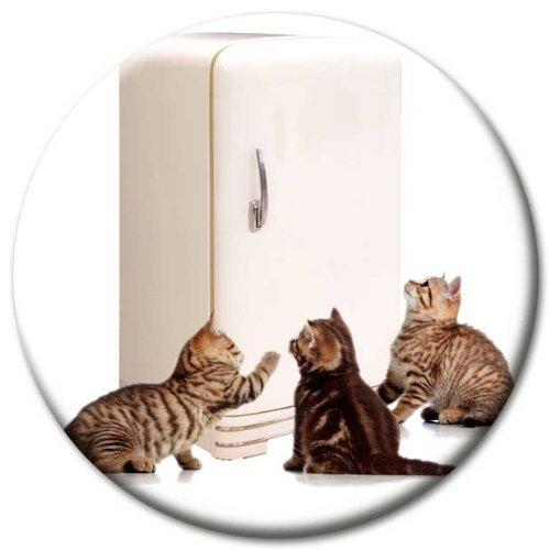 Magnet Katzen am Kühlschrank Ø 5 cm Kühlschrankmagnet mit innovativem Katzenmotiv Katzenmagnet für Magnettafel Pinnwand Magnetpinnwand Memoboard Whiteboard - Original Magnete GUMA Magneticum