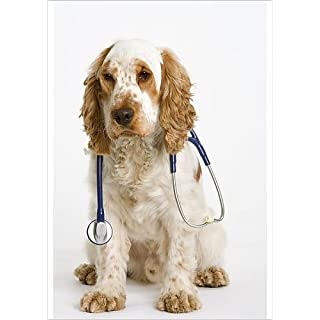 Media Storehouse A1 Poster of Dog - English Cocker Spaniel - With medical kit, wearing stethoscope (646633)