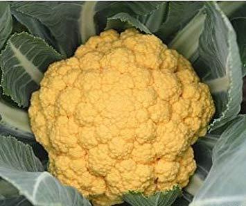 Fash Lady 4 Ankunft Außenpflanzen Garten Sementes Blumenkohlsamen Schnee Heißer Gesunde Gemüse 100 samen 4