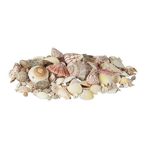 ko im Set, Mix mit großen Meeresschnecken, Jakobsmuscheln, Stranddeko zum Basteln, maritim 1kg, bunt (Groß Meer Muscheln)