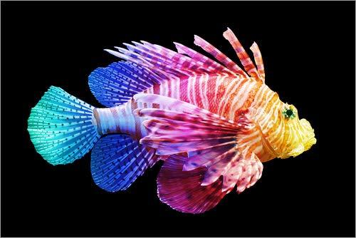 Posterlounge Acrylglasbild 100 x 70 cm: Pazifischer Rotfeuerfisch (coloriert) von Editors Choice - Wandbild, Acryl Glasbild, Druck auf Acryl Glas Bild