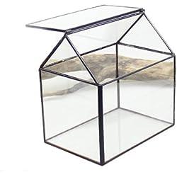 dingsheng House Forme géométrique côté ouvert en verre pour plantes succulentes Cactus Télécommande Mousse miniature