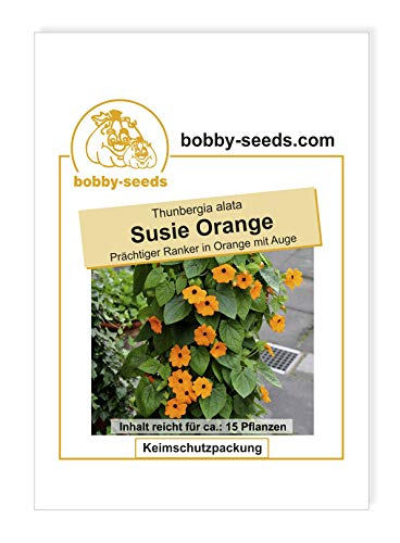 Bobby-Seeds Kletterpflanzensamen Schwarzäugige Susanne, Susie Orange Portion