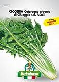 Sementi orticole di qualità l'ortolano in busta termosaldata (160 varietà) (CICORIA CATALOGNA GIGANTE DI CHIOGGIA SEL. ASCOLI)