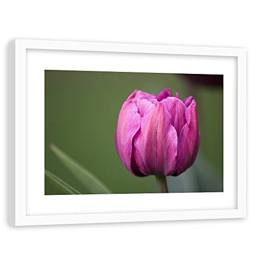 Tableau Cadre Blanc Tulipe Impression Art Fleur Nature Plante Couleur Rose 90x60 cm