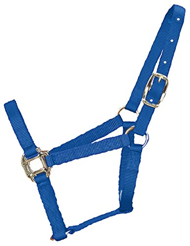 hamilton-halter-horse-equal-economy-triple-thick-100-200-lbs-foal-berry-blue-3q