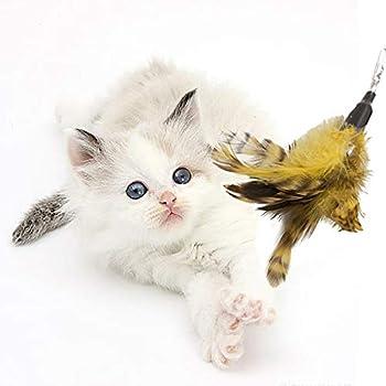 Cat Dangler Toy Training Télescopique interactif rétractable Naturelles plume Wand Cat Toy avec 3 recharges de plumes (80cm)