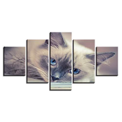 YCWYF HDDrucke Decor Schlafzimmer Wand 5 Stücke Tiere Schöne Katzen Blaue Augen Poster Modulare Leinwandbilder Kunst Moderne Malerei Size3 Kein Rahmen