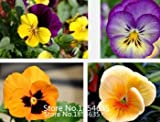 Fash Lady Gartenpflanze Stiefmütterchen Samen Bunte Gelb Blau Rot 100 Teile/Paket Bonsai Samen