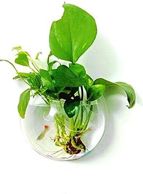 JIANGU 23 cm Acryl Hängen Wandhalterung Aquarium Schüssel Vase Aquarium Pflanze Wohnkultur Liefert Pet Produkte