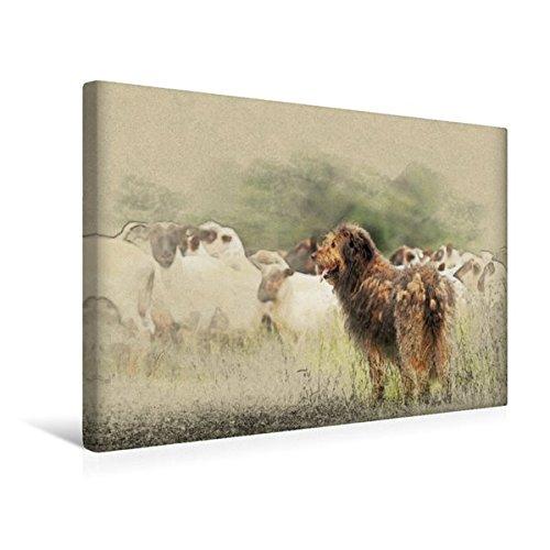 Premium Textil-Leinwand 45 cm x 30 cm quer, Ein Motiv aus dem Kalender Altdeutsche Hütehunde 2017 |...