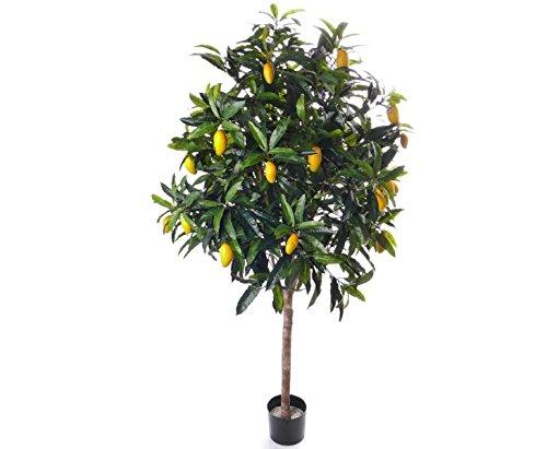 Künstlicher Mangobaum, Exotischer Kunstbaum, 210cm – Kunstpflanze Kunstbaum künstliche Bäume Kunstbäume Gummibaum Kunstoffpflanzen Dekopflanzen Textilpflanzen Textilbäume