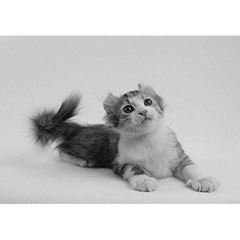 American Curl Gatto–Poster Amazing con 1–Migliore qualità–Nuovo–Poster–Quadro migliore prezzo migliore formato A3 - Poster Curl