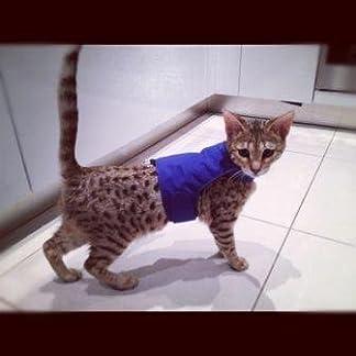 mynwood cat jacket/harness blue kitten up to 8 month - escape proof Mynwood Cat Jacket/Harness Blue Kitten up to 8 month – Escape Proof 41suinijwjL