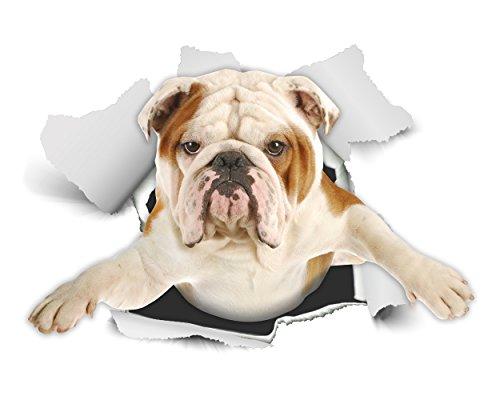 Winston & Bear 3D Hund Aufkleber - 2er-Pack - British Bulldog Aufkleber für Wand, Kühlschrank englische Bulldogge