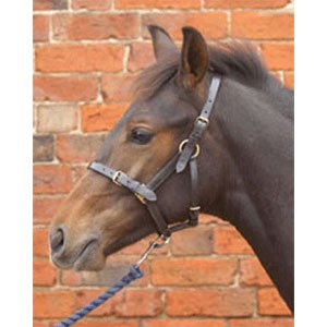 Hy Leather Foal Head Collar - x large - brown (Hy Lederfohlenhalfter, XL, Braun)