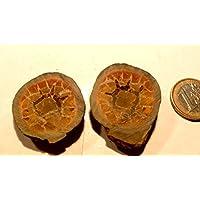 Septarien Paar, 32,35 g schwer, mit wunderschöner Zeichnung, Farben und Strukturen. Made by Nature. preisvergleich bei billige-tabletten.eu
