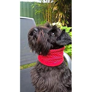 Hundeloop, Hundeschal, Hundeschlauchschal in rot mit Punkten