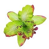 Mioloe Décor de tête de Fleurs artificielles, Pince à Cheveux Pince à Cheveux Broche Mariage Cravate thaïlandaise Mariage Orchidée