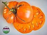 GEOPONICS 100: USA cimelio organici BigPink Stripe pomodoro 25-200 (1 libbre)