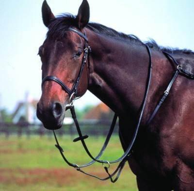 Leder Jagd Geschirr/Martingal alle Größen/Farbe schwarz schwarz Pony