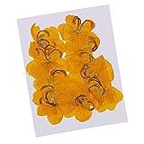 Baoblaze 12 Stück Natürlichen Echte Trocken Blumen Blüten Blätter getrocknete Samen Blumen Kunstblumen Naturdeko für Scrapbooking Kunsthandwerk DIY Nail Deko