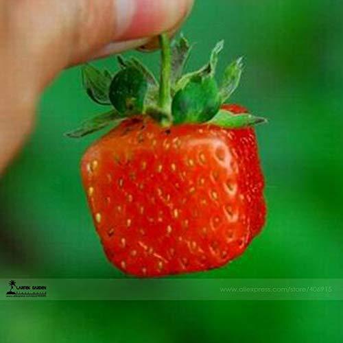 Bellfarm Bonsai nueva variedad más rara Plaza Roja Fresa buen Gran jugosa sabrosa dulce fresa de alta germinación -100pcs / pack