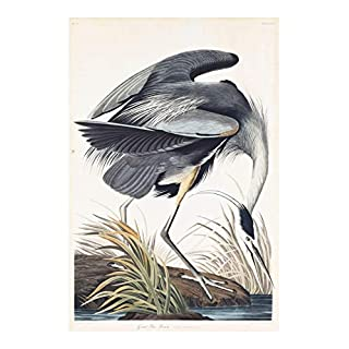 Spiffing Prints John James Audubon - Great Blue Heron Ardea Herodias - Large - Archival Matte - Framed