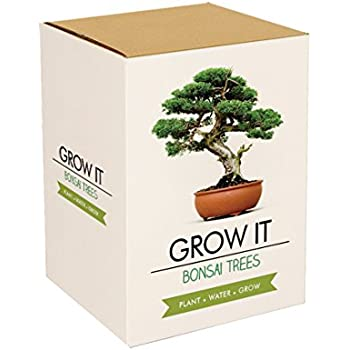 Gift Republic: Grow It. Grow Your Own Bonsai Trees