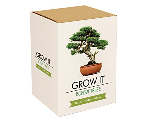 Gift Republic Grow It - Set per la coltivazione di un albero bonsai