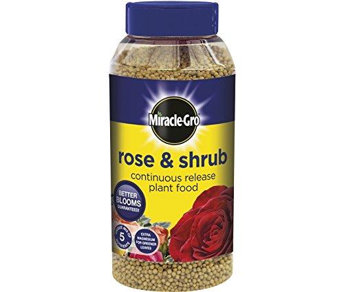 neoteric-design-miracle-gro-slow-release-rose-shrub-1kg-shaker-jar