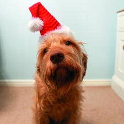Rosewood Christmas Neuheit Santa Hat für - Rot Cupid Kostüm