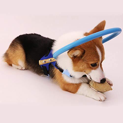Ocamo Halo Geschirr für Blinde Hunde, Anti-Kollisionsring, Katarakt, Tierschutz, Kreisführung, Hundegeschirr für Blinde Haustiere Blue M -