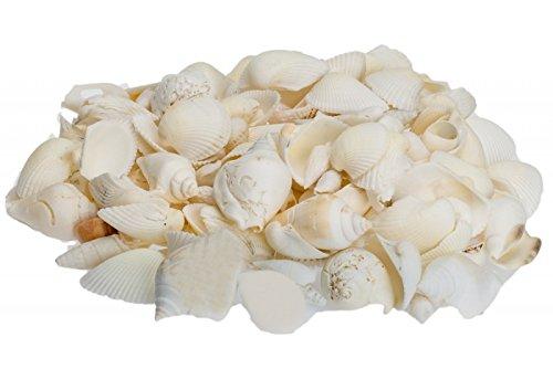 NaDeco Muschelmix weiß 1kg weiße Muscheln Bastelmuscheln Dekomuscheln Deko Schnecken Maritime Dekoration
