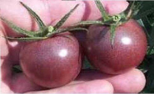 JustSeed - Gemüse - Tomate - Black Cherry - 150 Samen