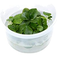 Tropica Limnobium Laevigatum frogbit 1–2-grow flotante frogbit Tissue Culture in vitro planta para Acuario Camarón Safe & Caracol libre