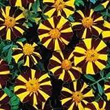 JustSeed - Blume - Studentenblume (French Marigold) - 30 Samen