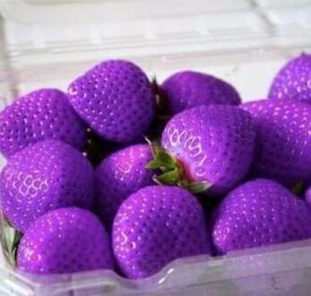 200pcs / lot graines de fraises fraises géant graines de fruits bio légumes pot bonsaï non-OGM pour des graines de plantes de jardin à la maison 10